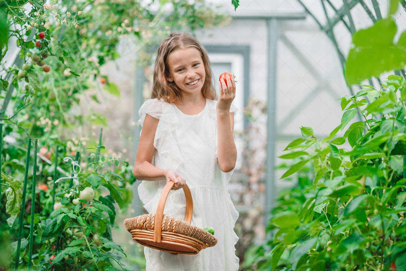 Little Girl Collecting Vegetables: Stock Photos