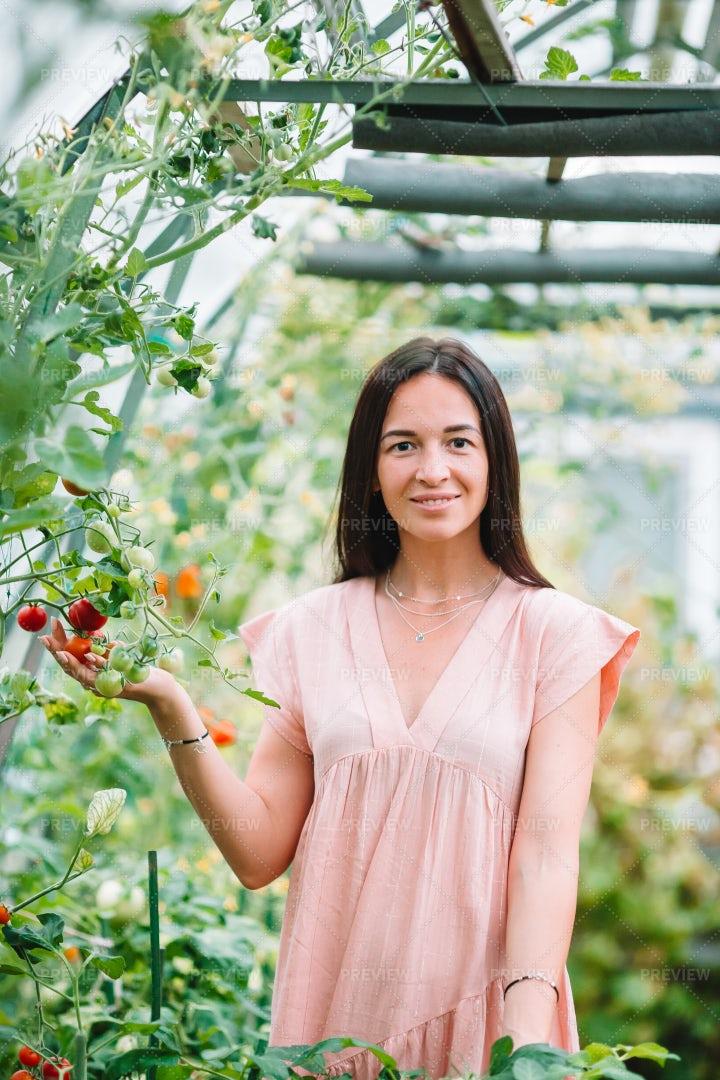 Woman In Tomato Greenhouse: Stock Photos