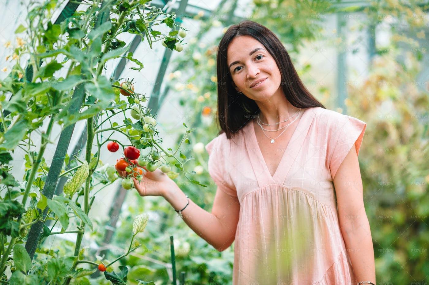 Tomato Greenhouse: Stock Photos