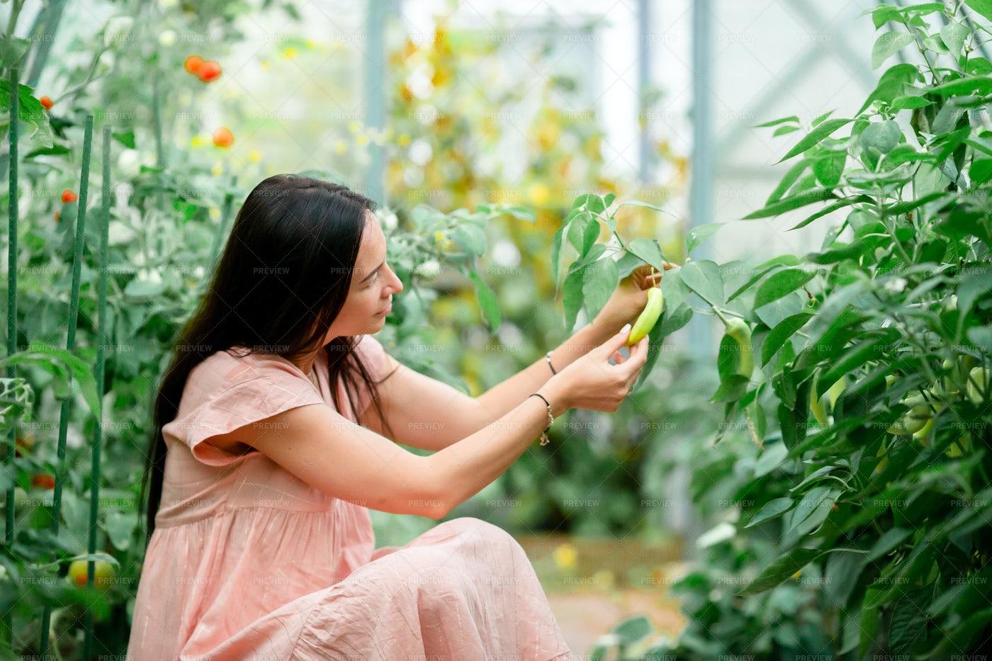 Tending The Vegetable Plants: Stock Photos