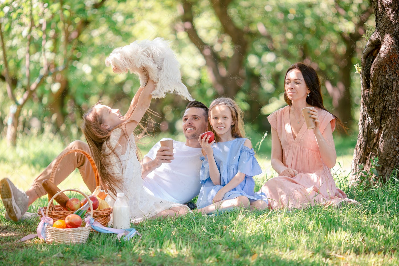 Child Lifts Puppy At Picnic: Stock Photos