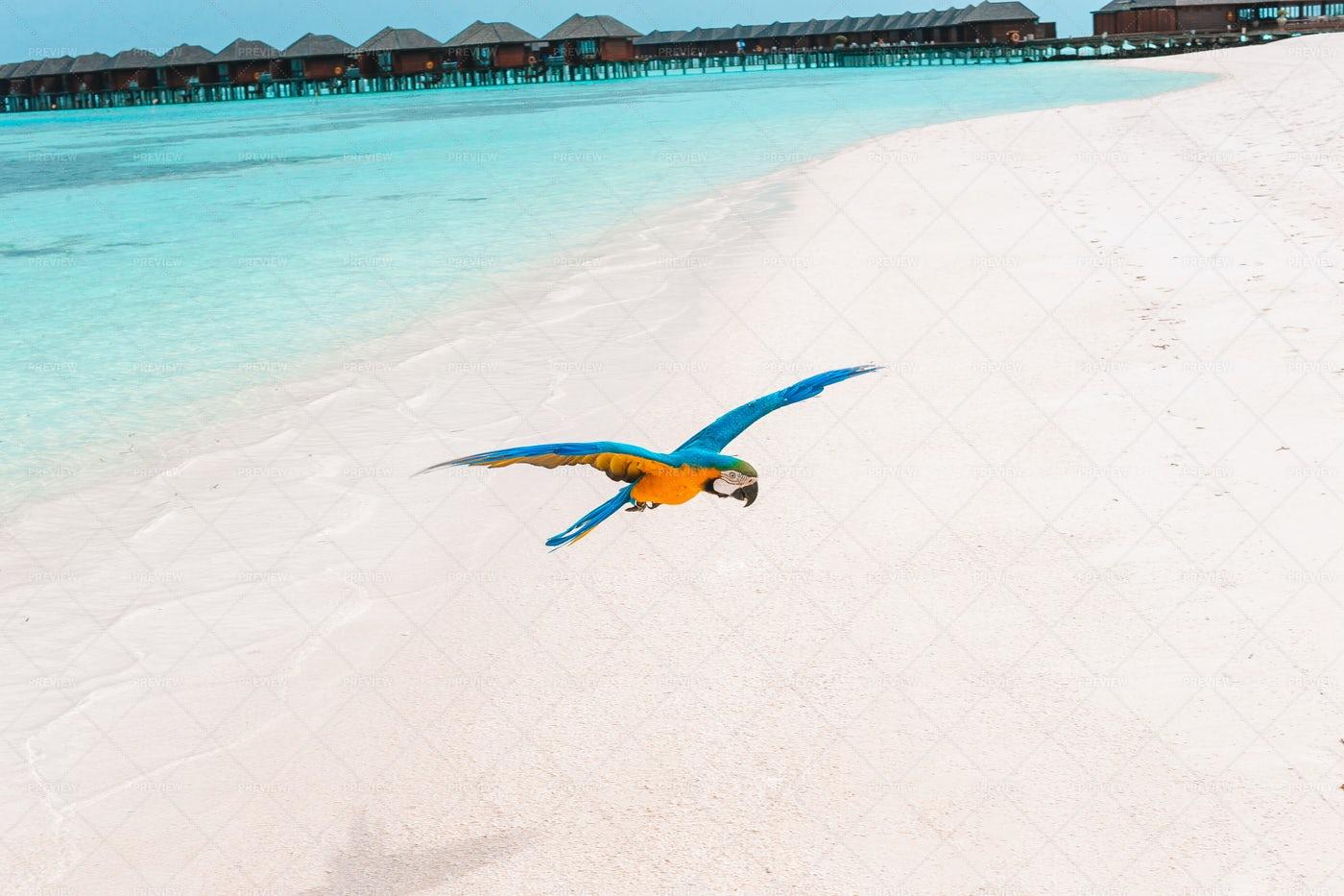 Parrot Flying Above Tropical Beach: Stock Photos