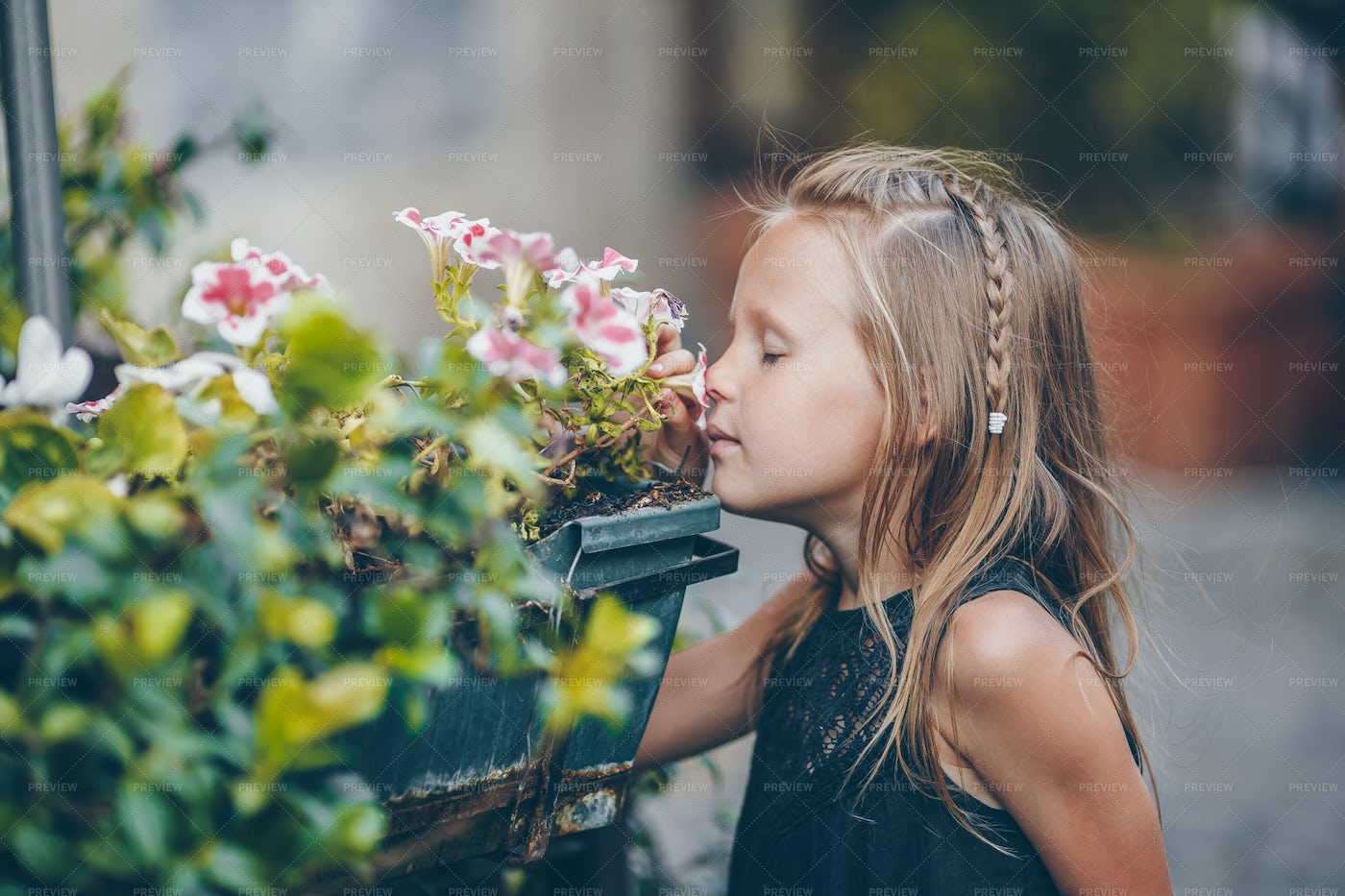 Smelling The Flowers: Stock Photos