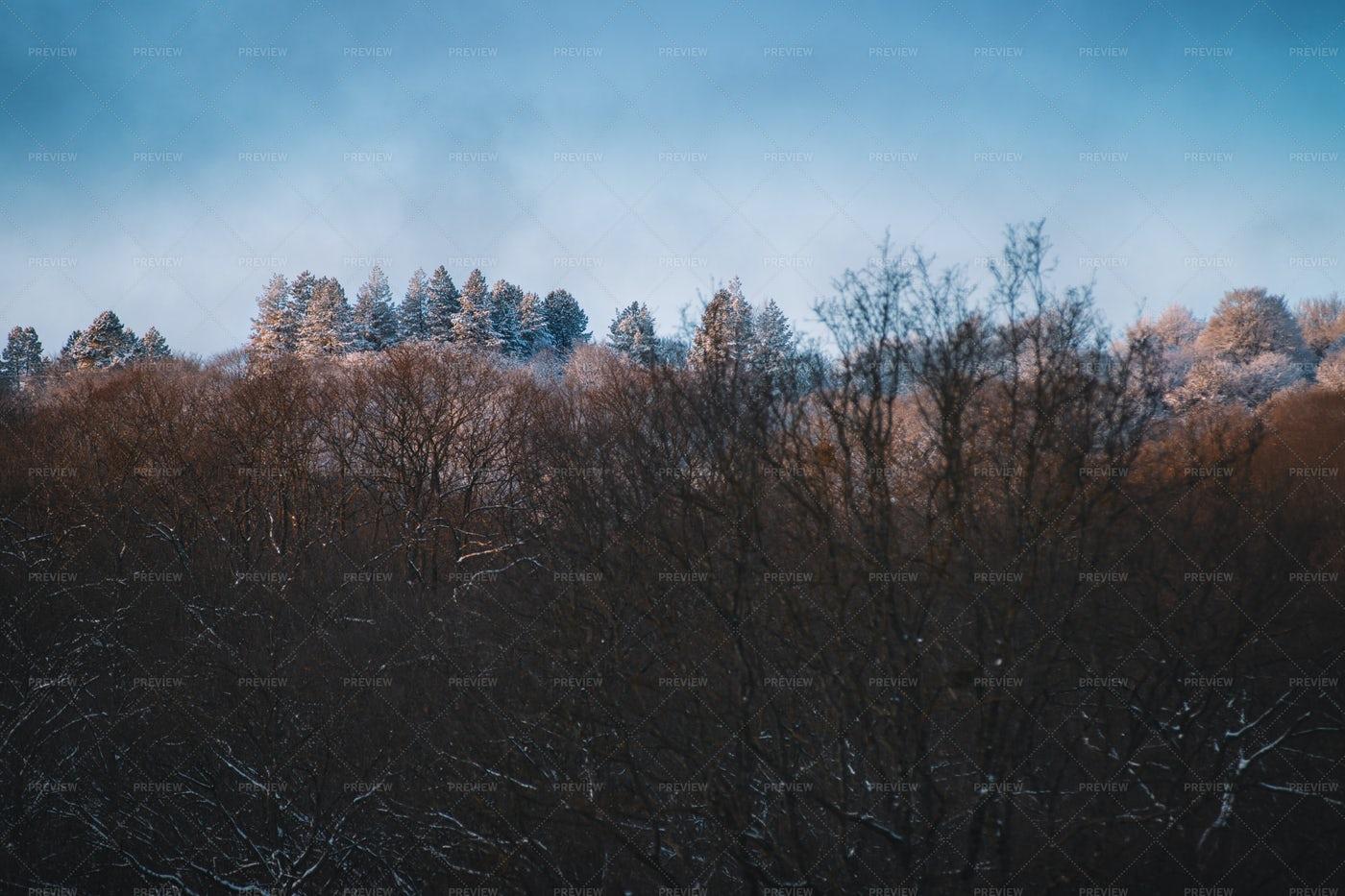 Snowy Mountain Trees: Stock Photos