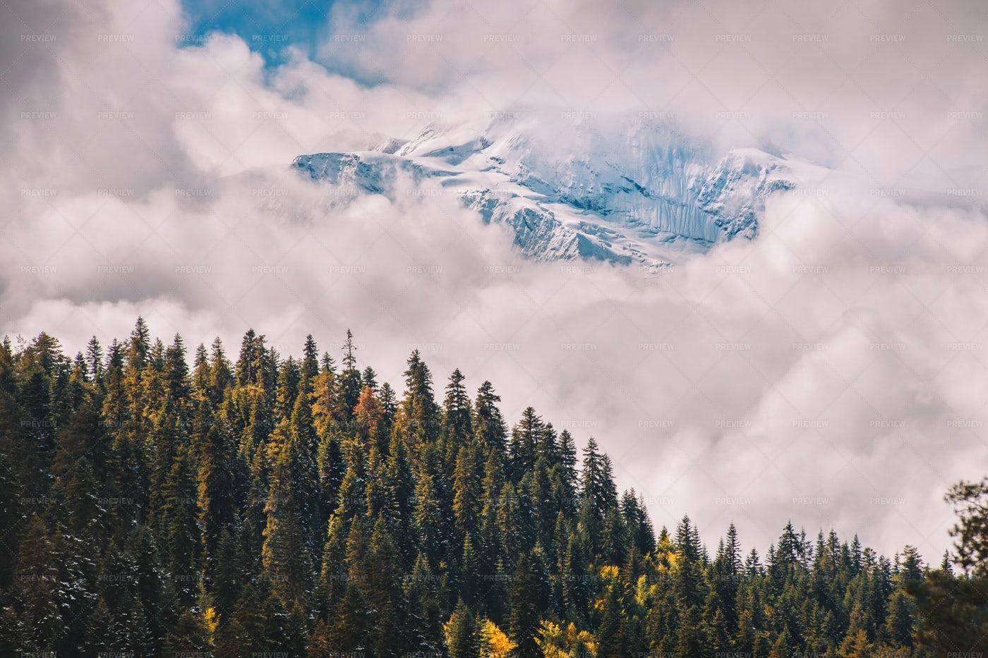Mountain Forest Beside Snowy Peak: Stock Photos