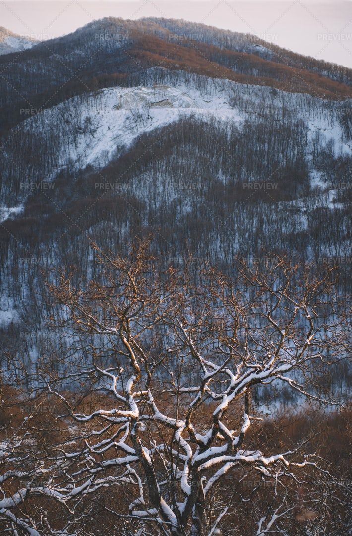 Snowy Tree In The Mountains: Stock Photos