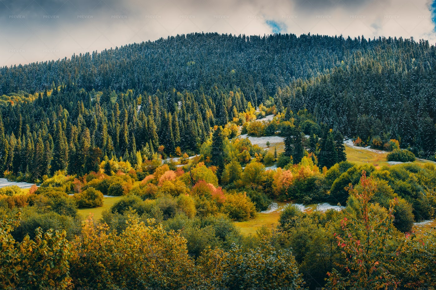Snowy Autumn In The Mountain Forest: Stock Photos