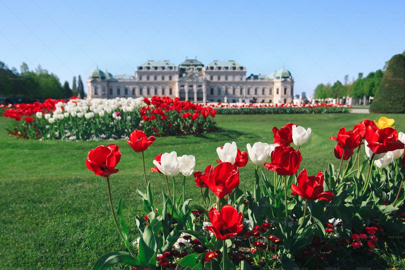 Belvedere Palace Flowers: Stock Photos