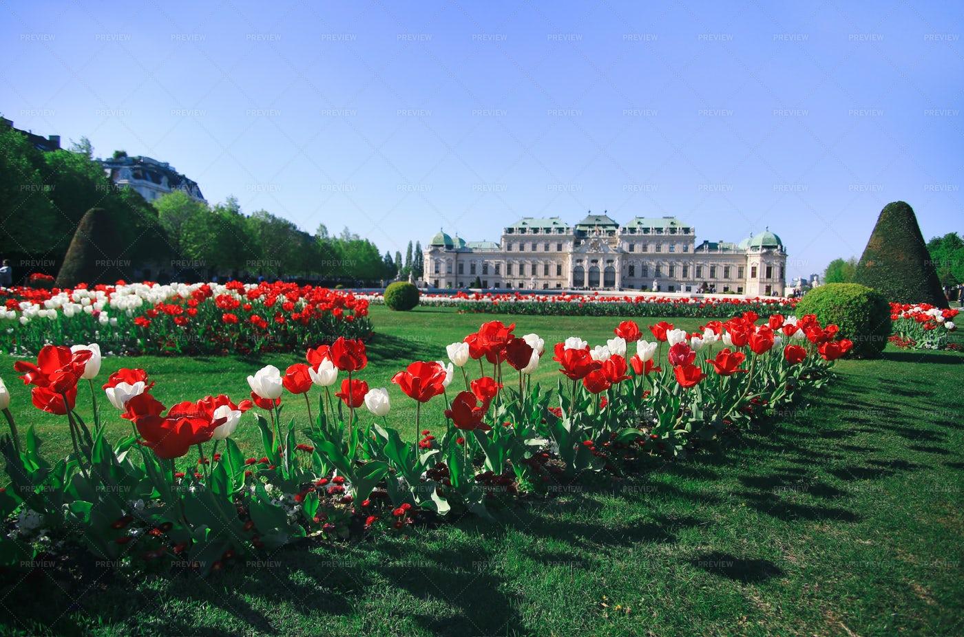 Flowers Of Belvedere: Stock Photos