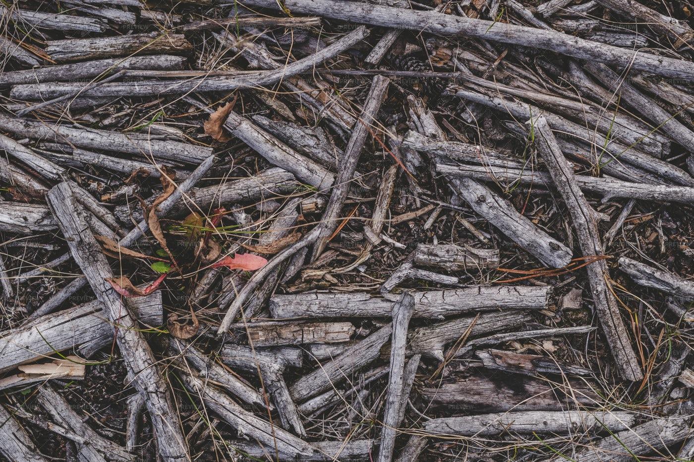 Dry Branches: Stock Photos