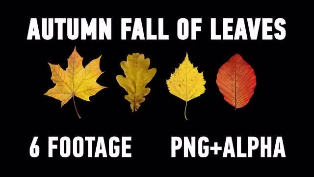 The Autumn Fall of Leaves Pack: Stock Motion Graphics