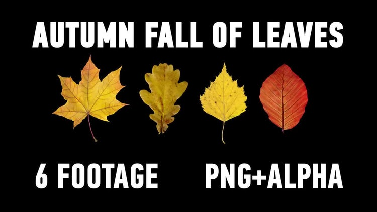 The Autumn Fall of Leaves Pack: Motion Graphics