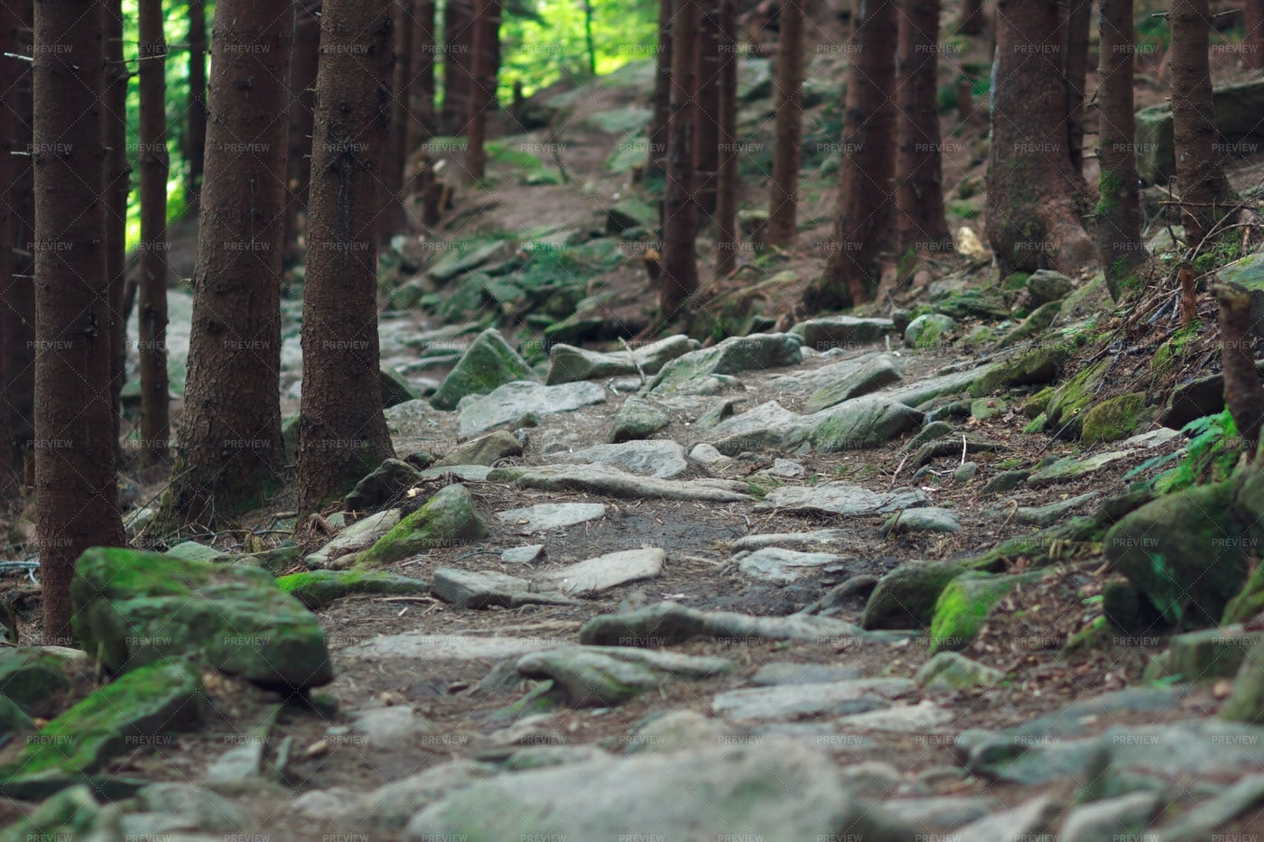 Mountain Forest Trails: Stock Photos