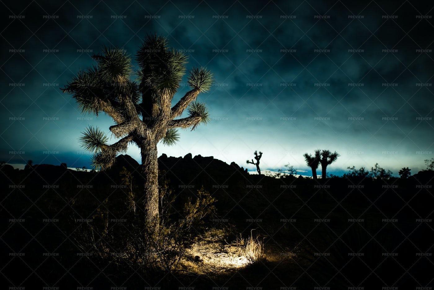 The Moody Mojave Desert: Stock Photos