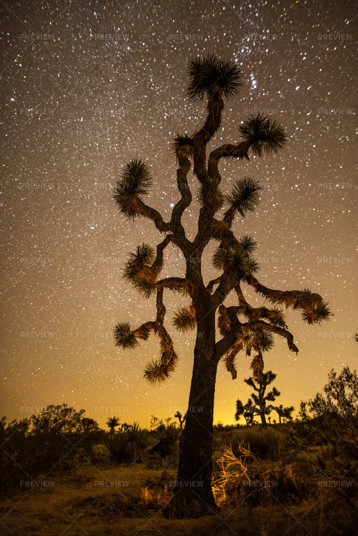 Joshua Tree Starscape: Stock Photos