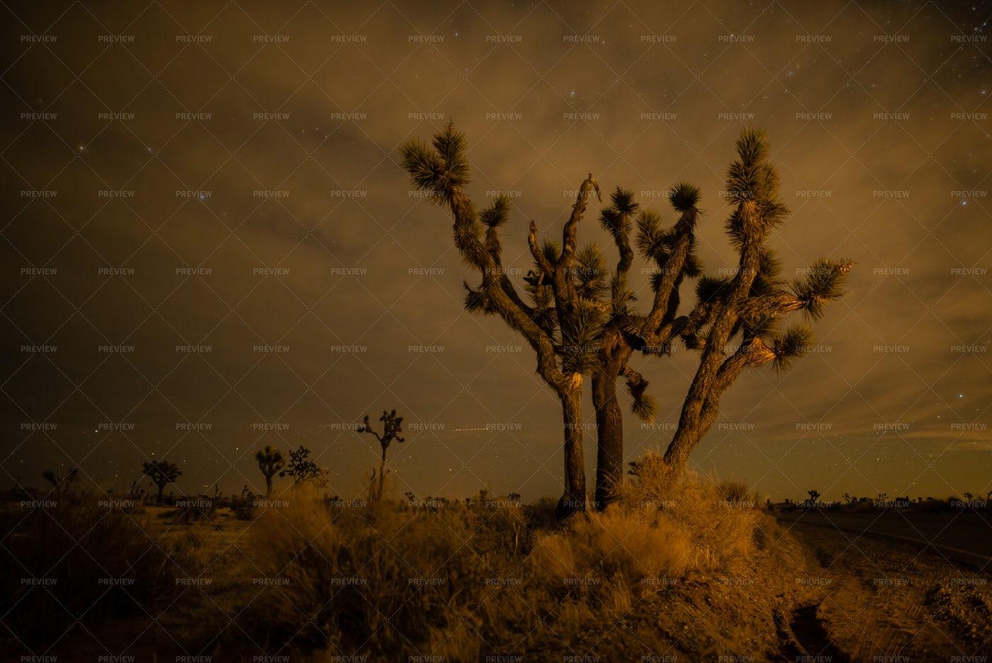 Joshua Tree In The Desert: Stock Photos
