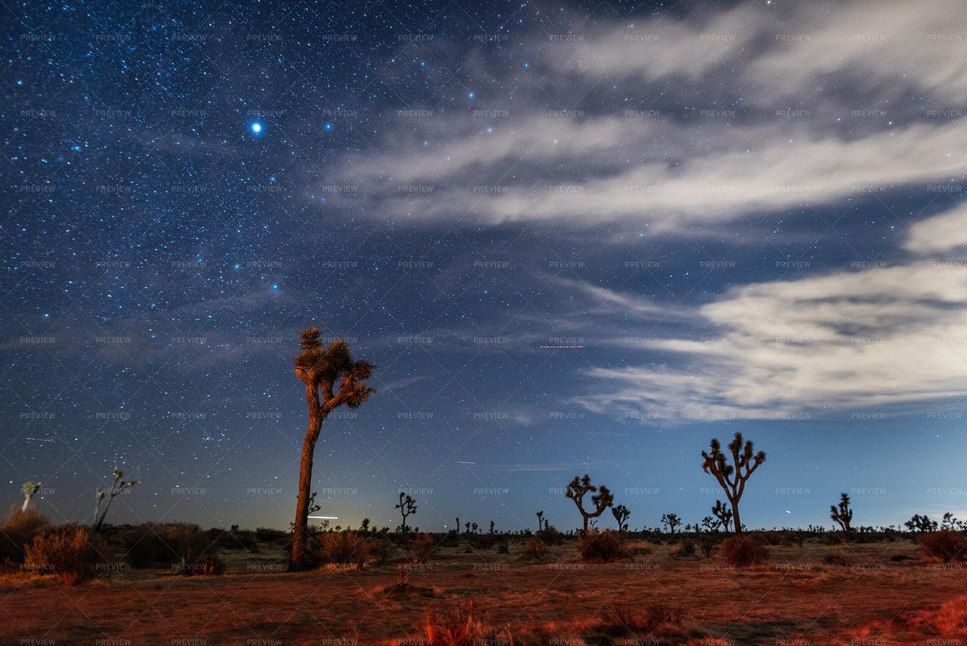Mojave Desert Under Stars: Stock Photos