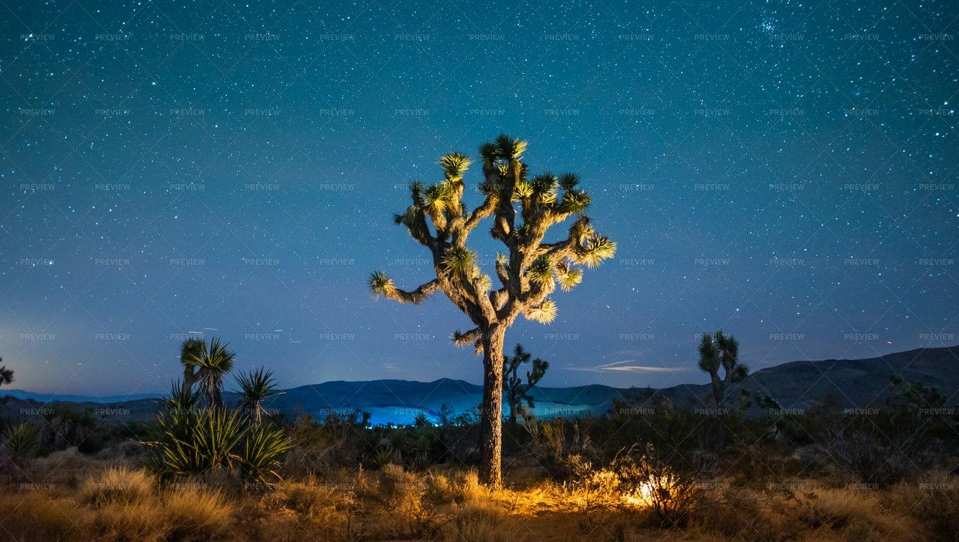 Mojave Desert Starscape: Stock Photos