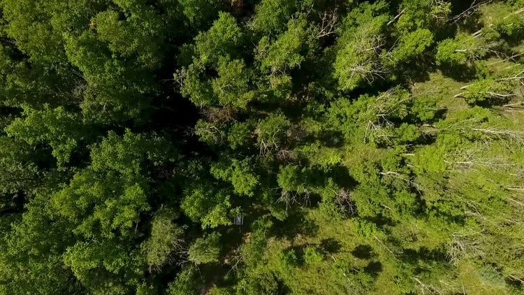 Forest Fly Over: Stock Video