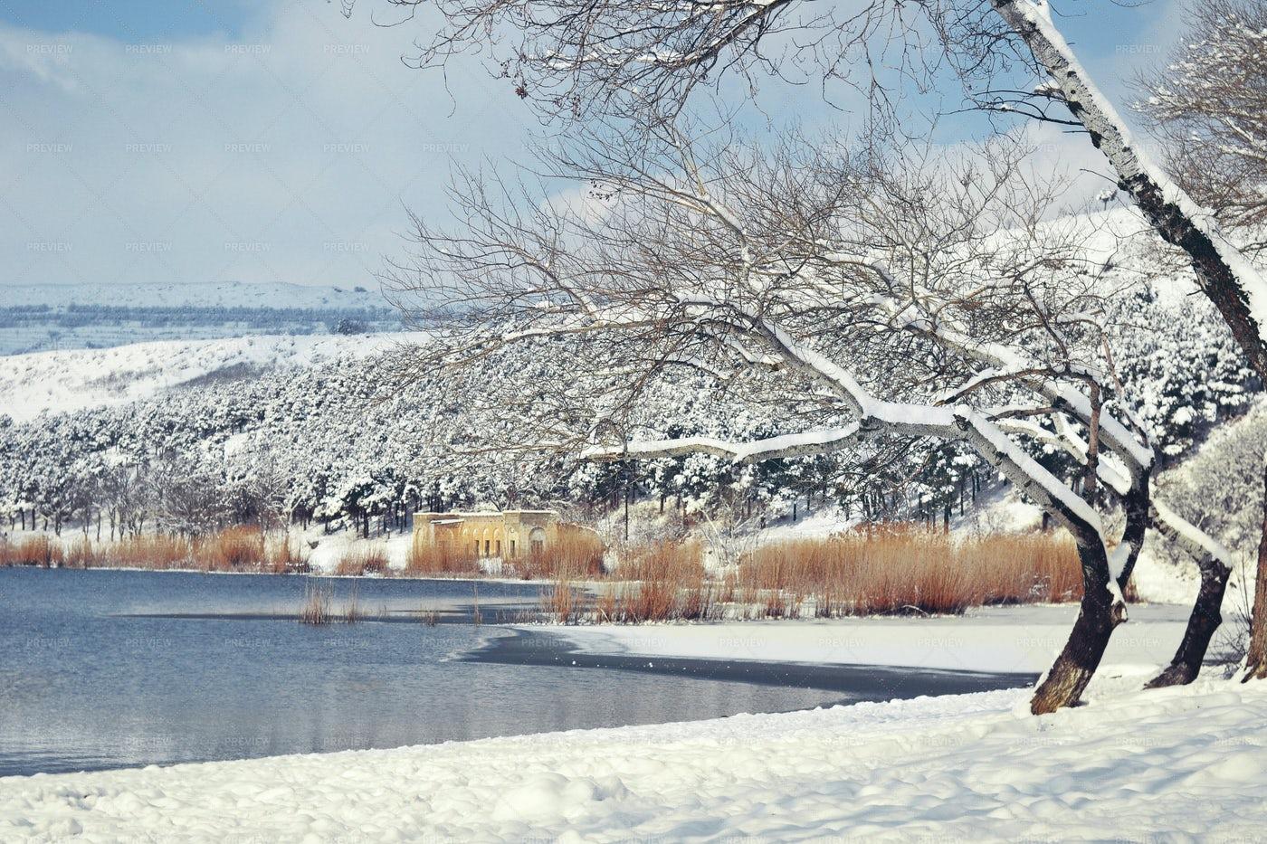 Snowy Trees Beside A Lake: Stock Photos