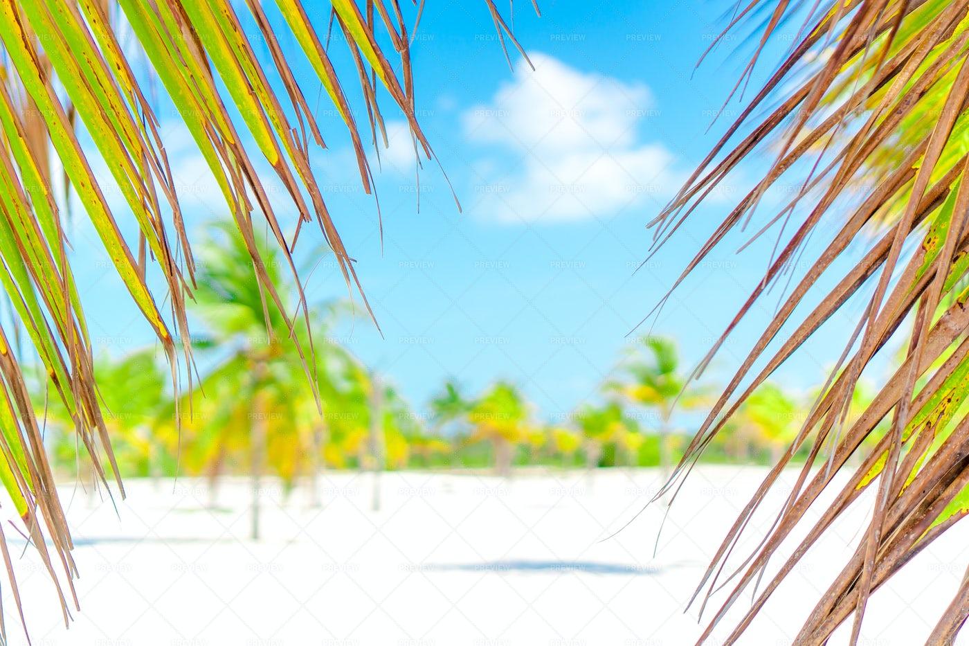 Palm Trees On A White Sand Beach.: Stock Photos
