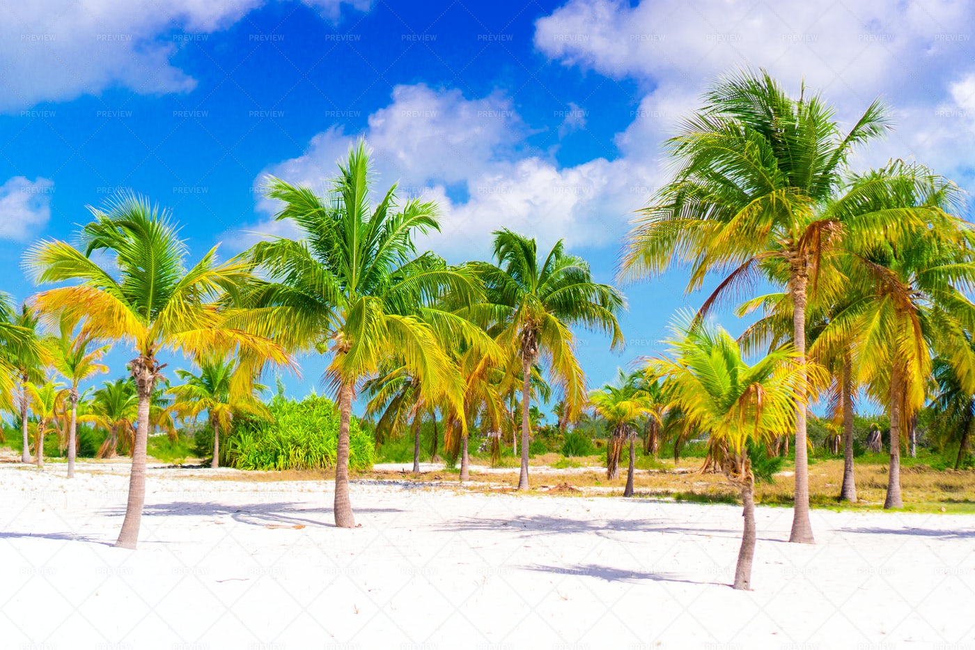 Palm Trees On A Sunny Beach: Stock Photos