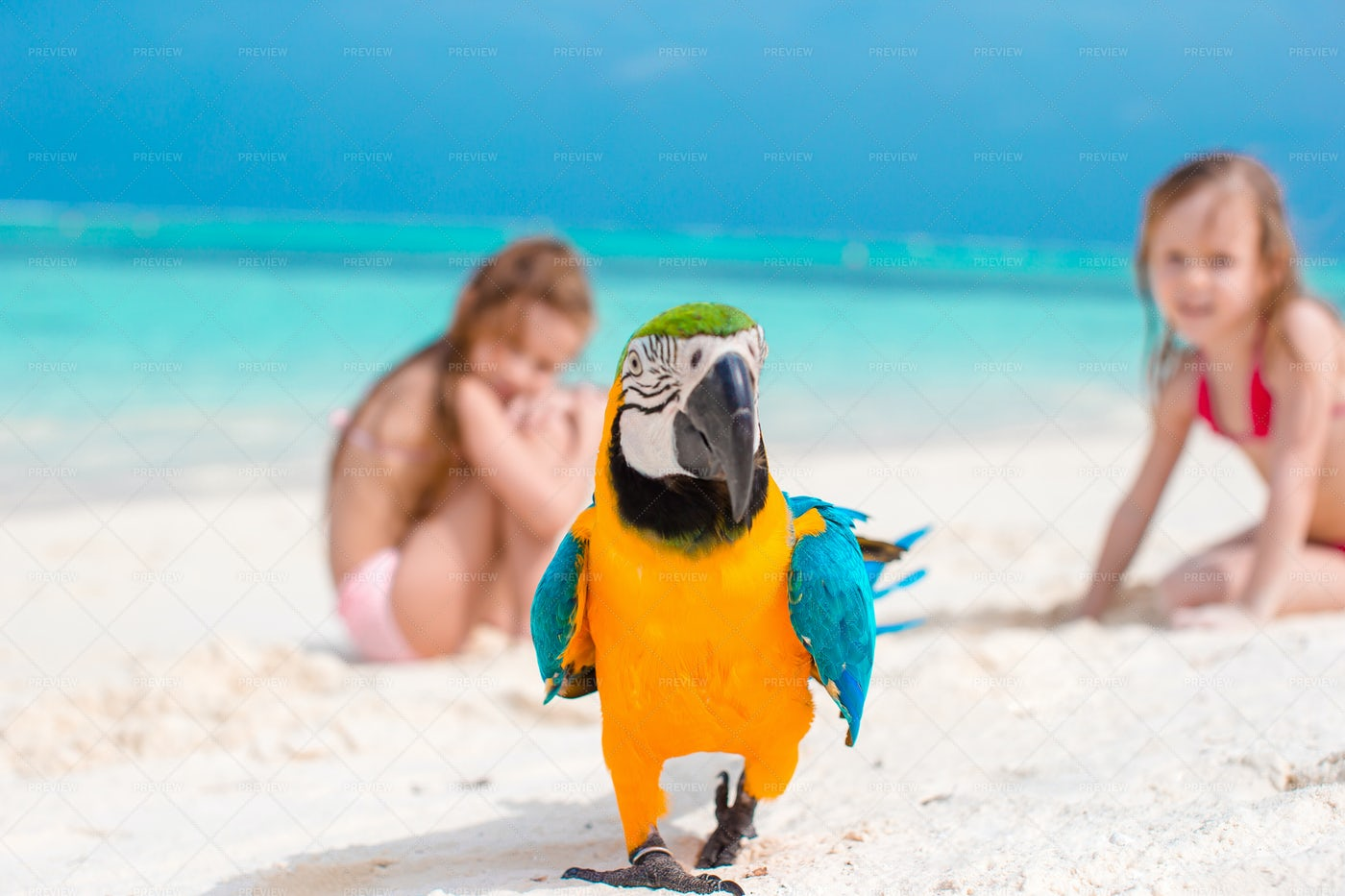 Parrot And Little Kids In The Back: Stock Photos