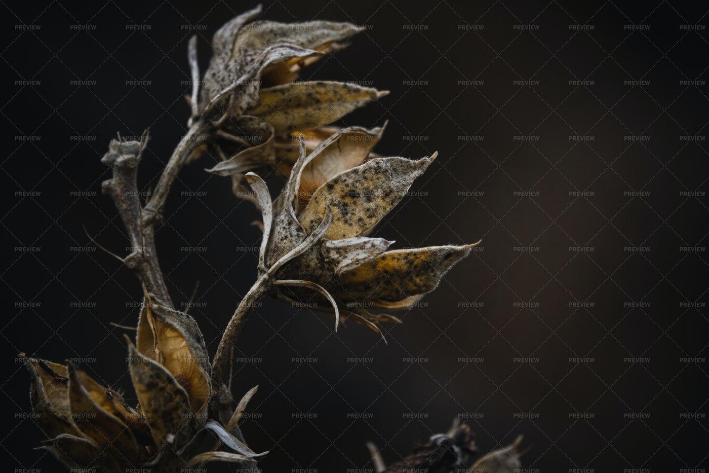 Dry Flower Tree Branch: Stock Photos