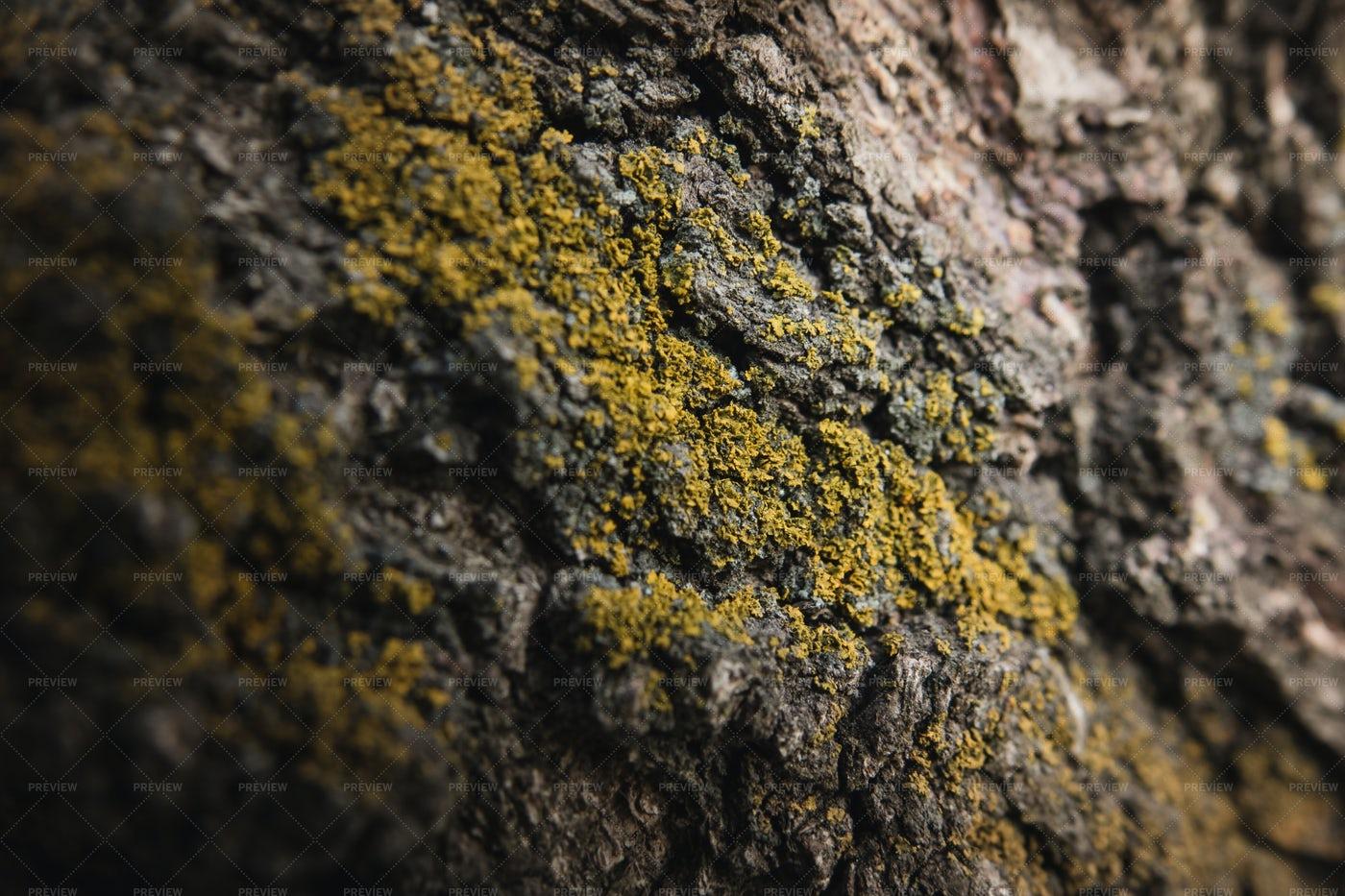 Tree Bark With Moss: Stock Photos