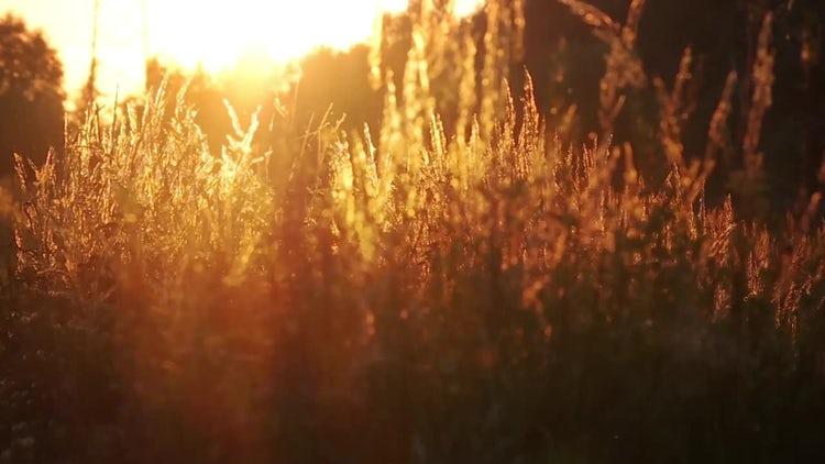Sunset Grass: Stock Video