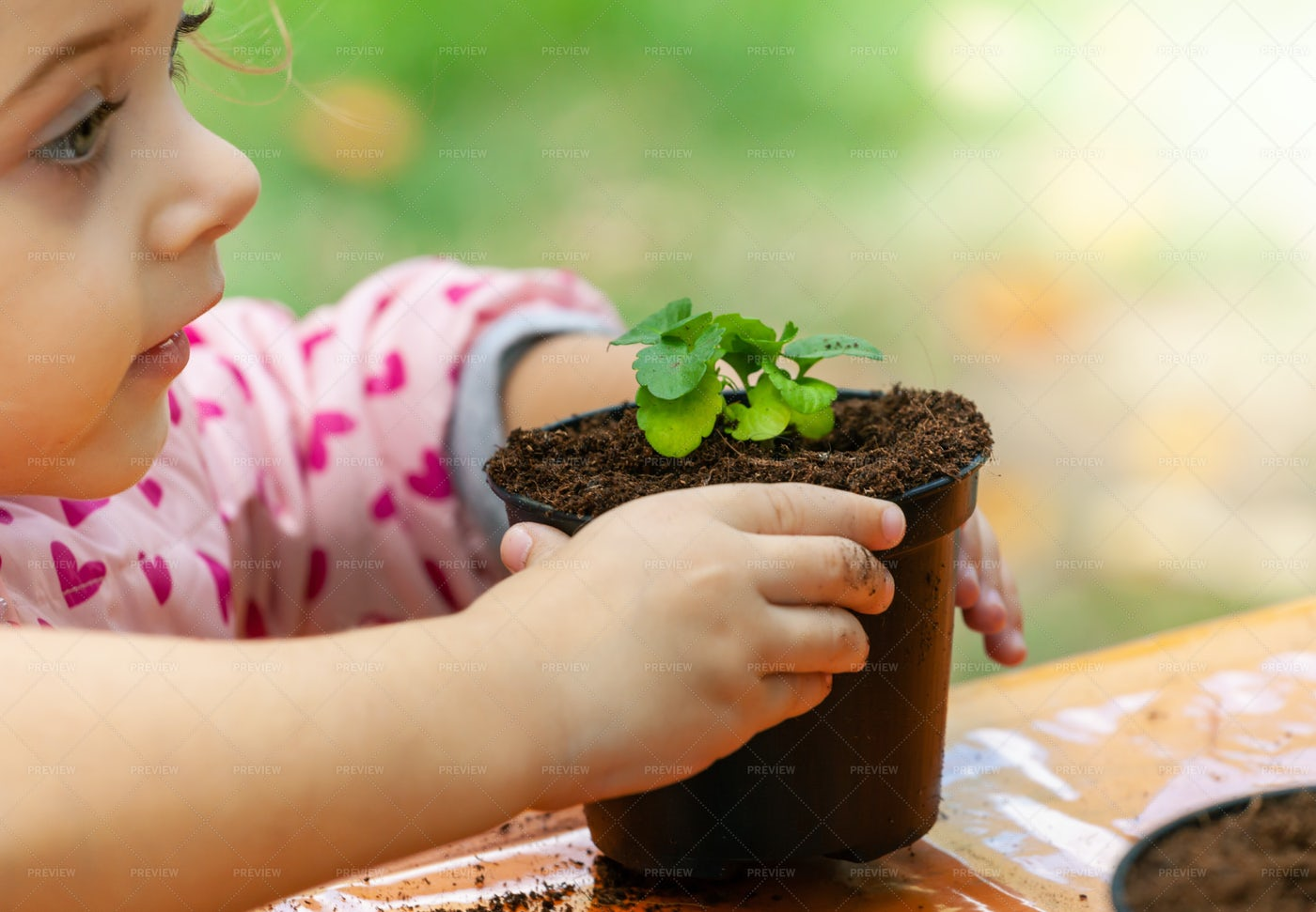 Child Plants A Seedling: Stock Photos