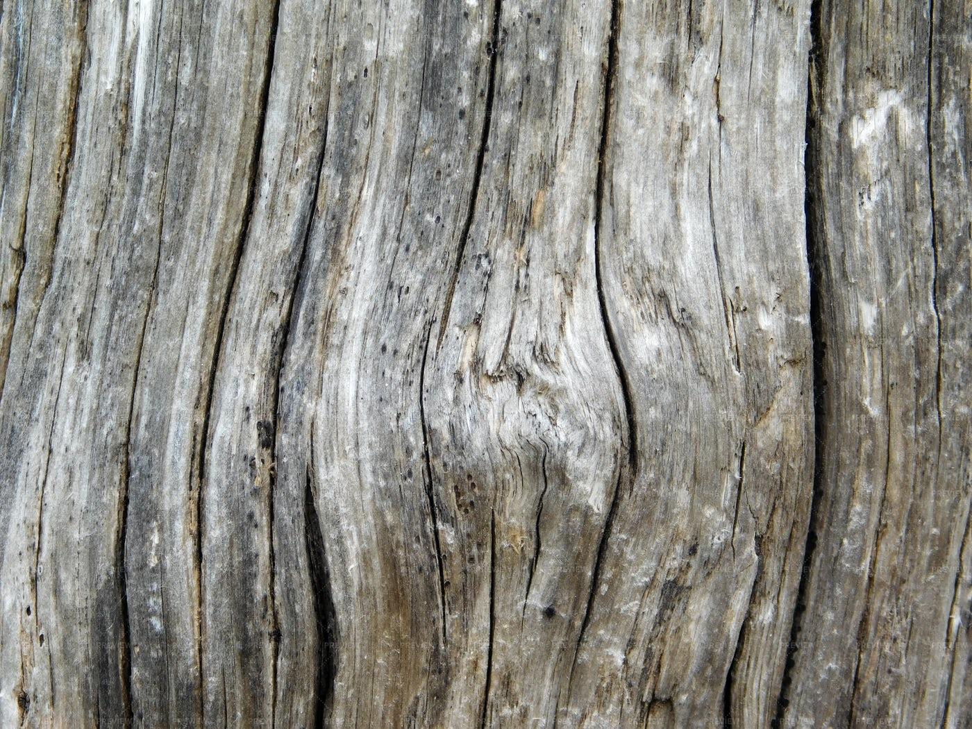 Tree Trunk Texture: Stock Photos