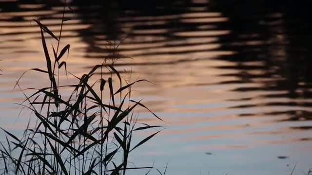 Sunset Grass: Stock Video
