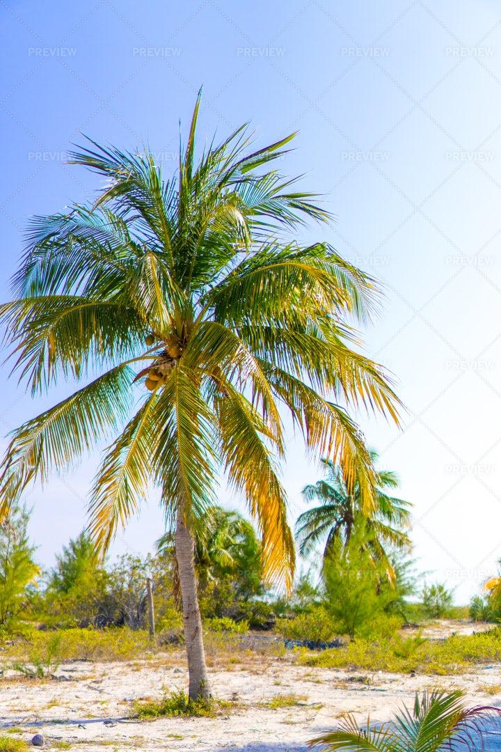 Beach Palm Trees: Stock Photos