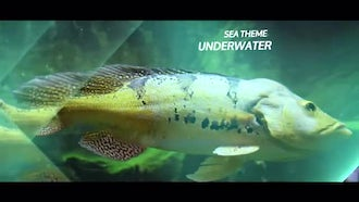 Underwater Sea Parallax Slideshow: After Effects Templates