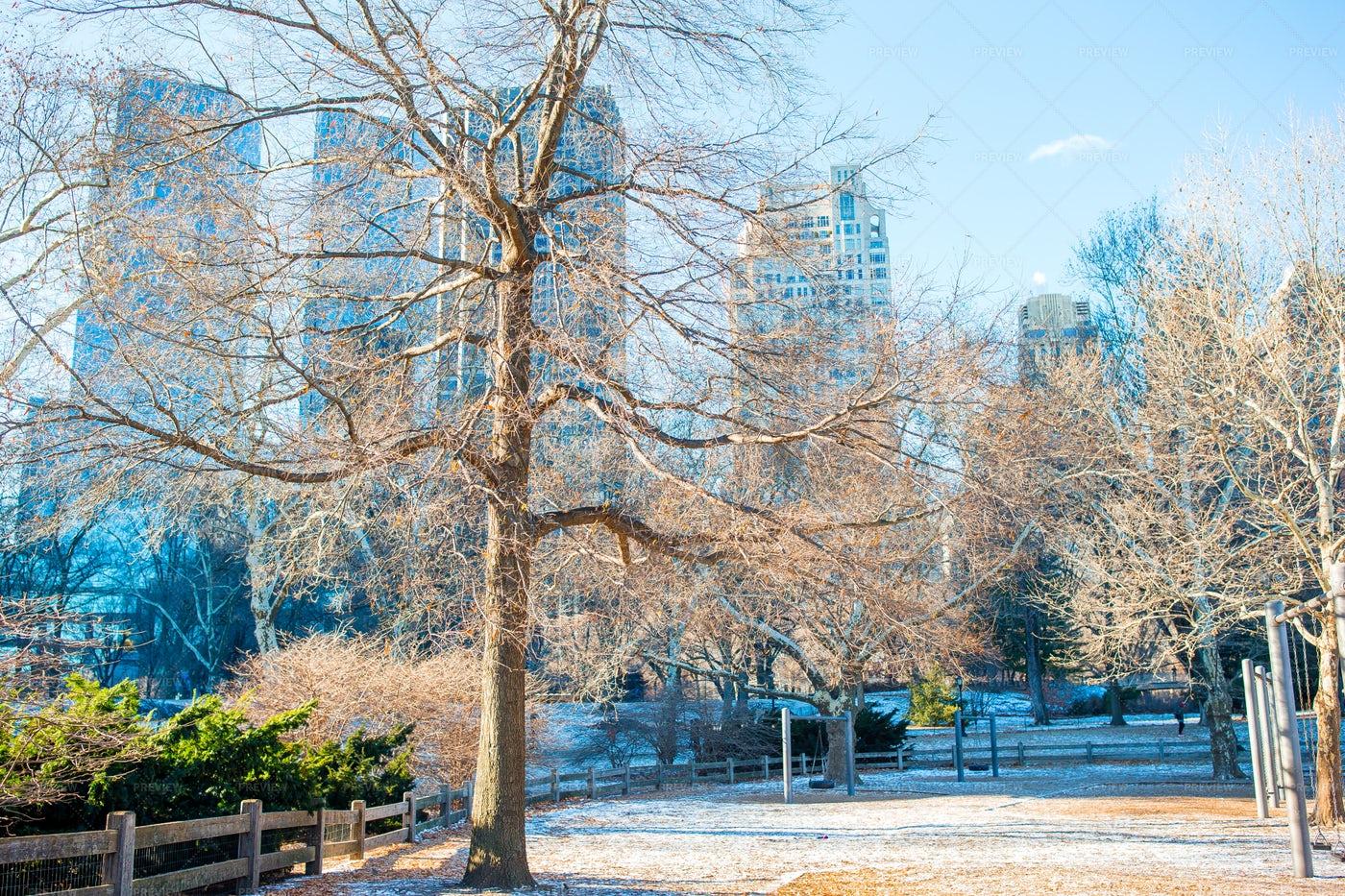 Central Park: Stock Photos