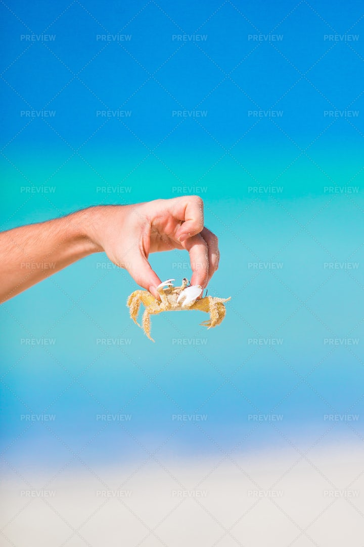 Picking Up The Crab: Stock Photos