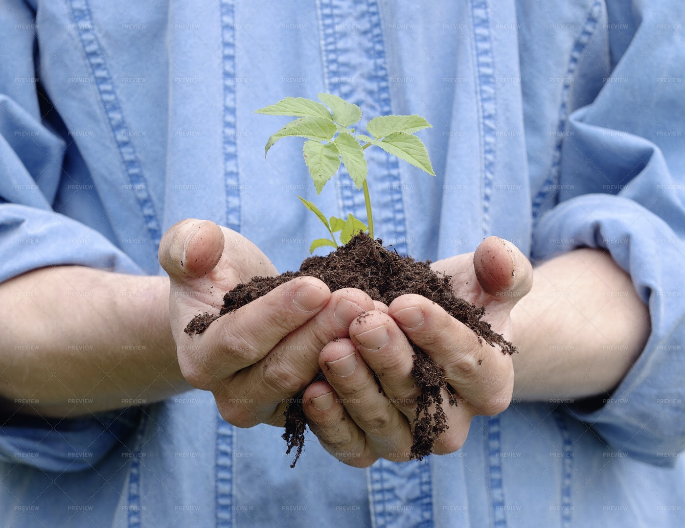 Holding Soil And A Plant: Stock Photos