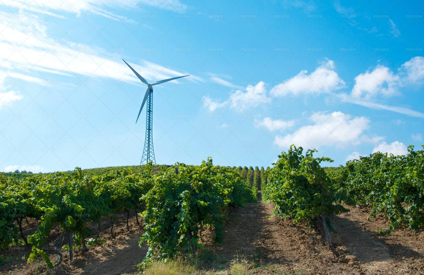 Wind Turbine In A Vineyard: Stock Photos