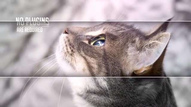 Elegant Parallax Lines: After Effects Templates