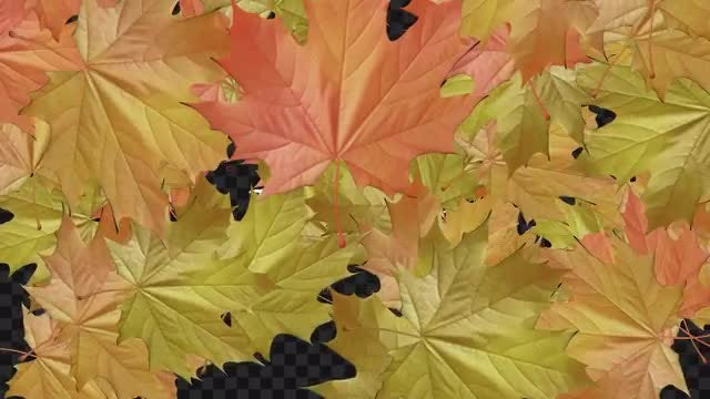 Autumn Leaves Transitions: Stock Motion Graphics