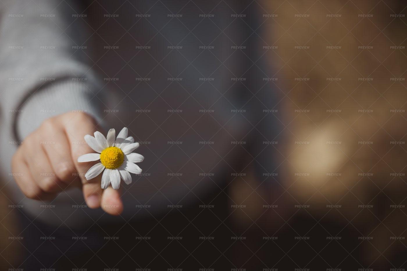 Child With A Daisy: Stock Photos