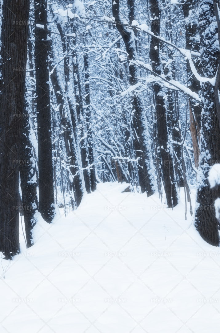 Snowy Forest: Stock Photos