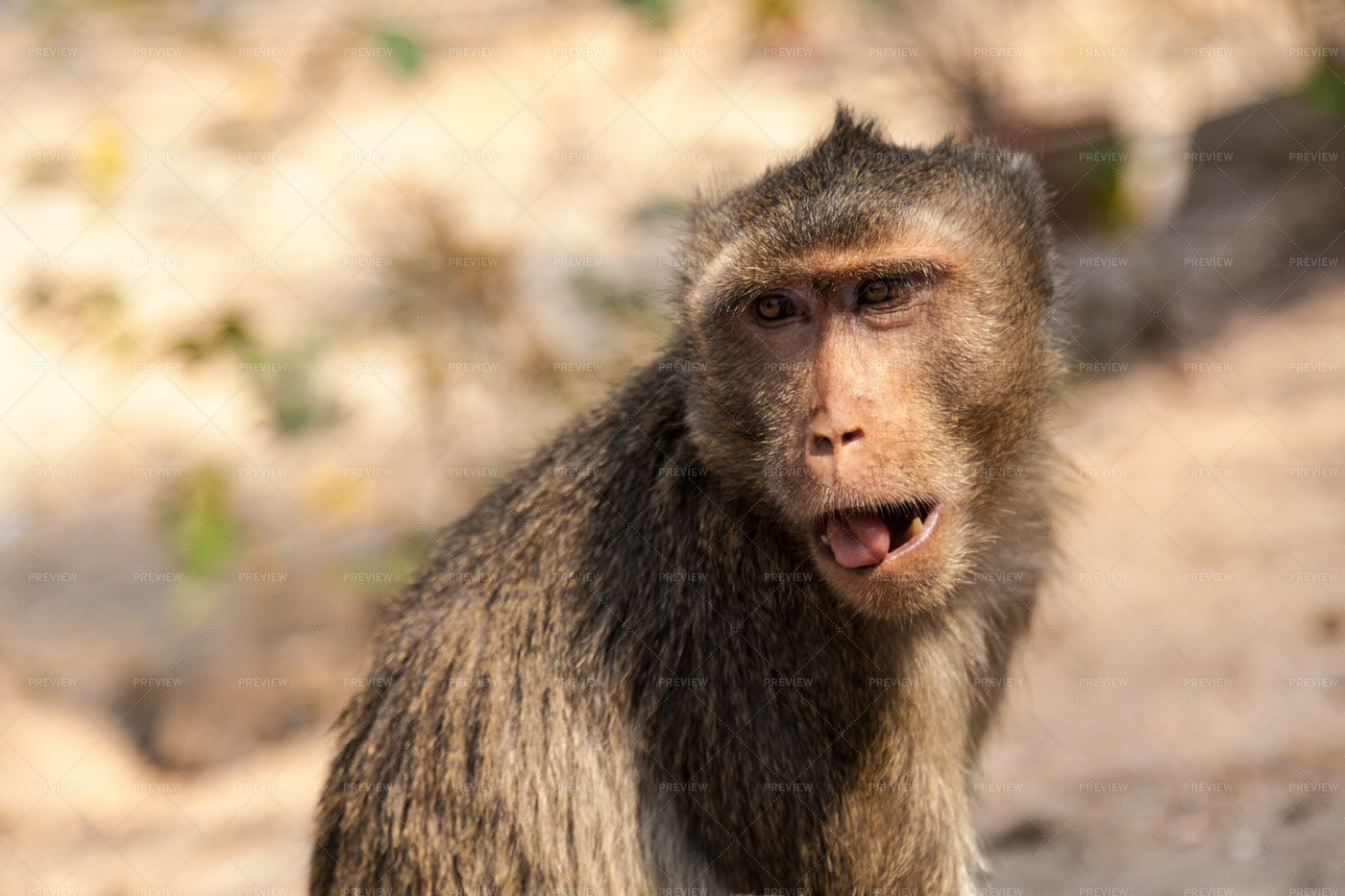 Monkey In Thailand: Stock Photos