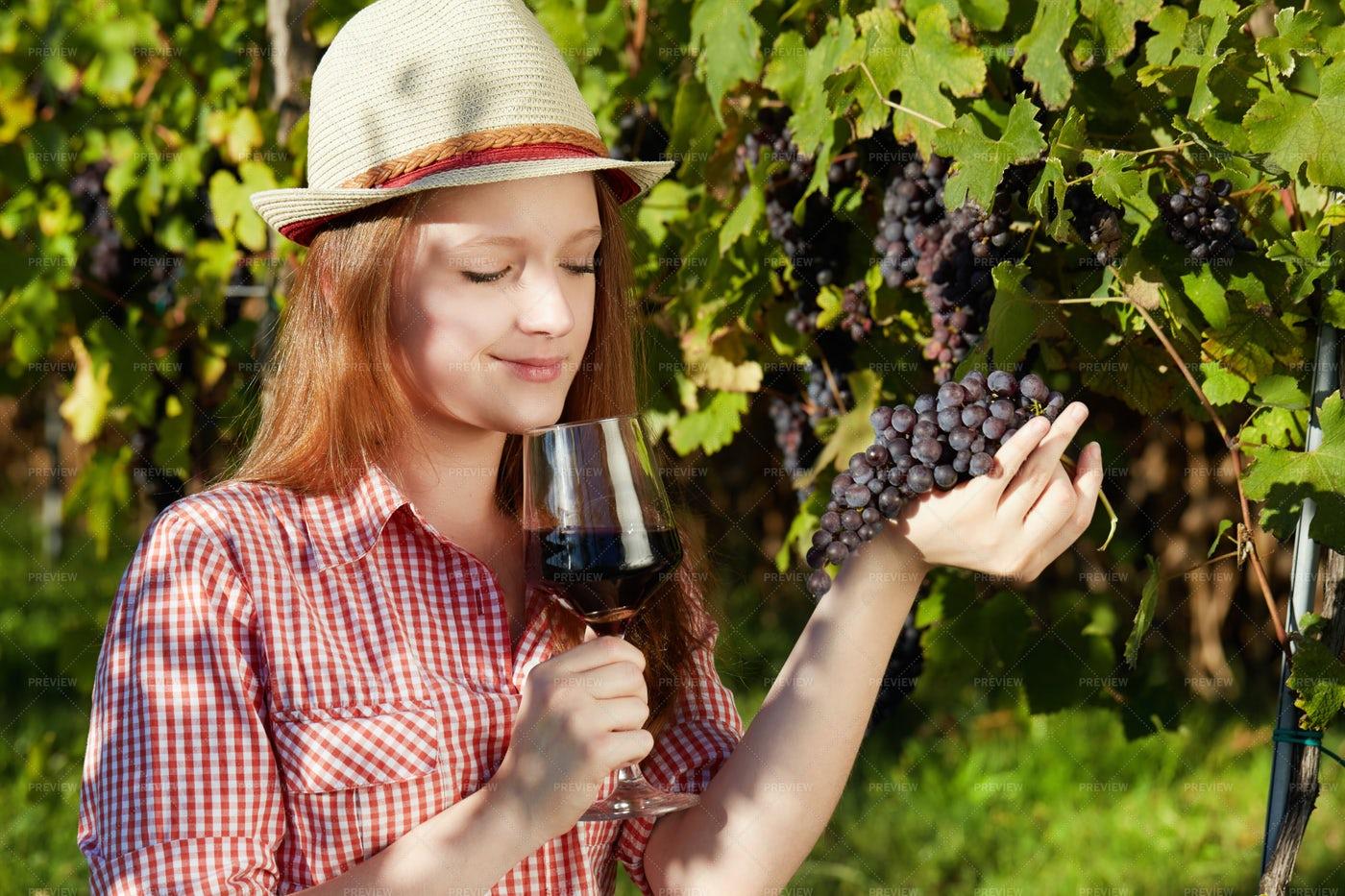 The Vineyard Yield: Stock Photos