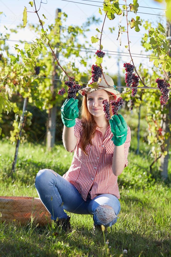 Happy Vintner: Stock Photos