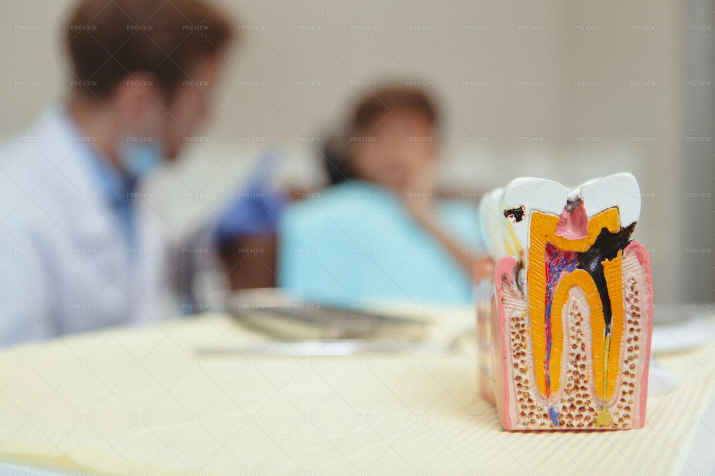 Dentist's Tooth Mold: Stock Photos