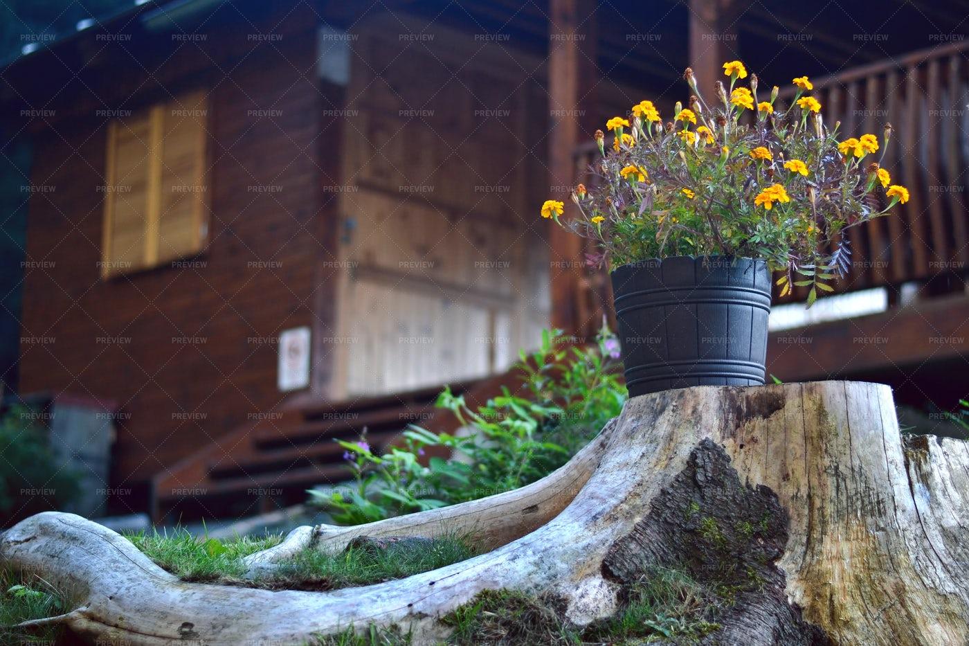 Flower Pot In The Garden: Stock Photos
