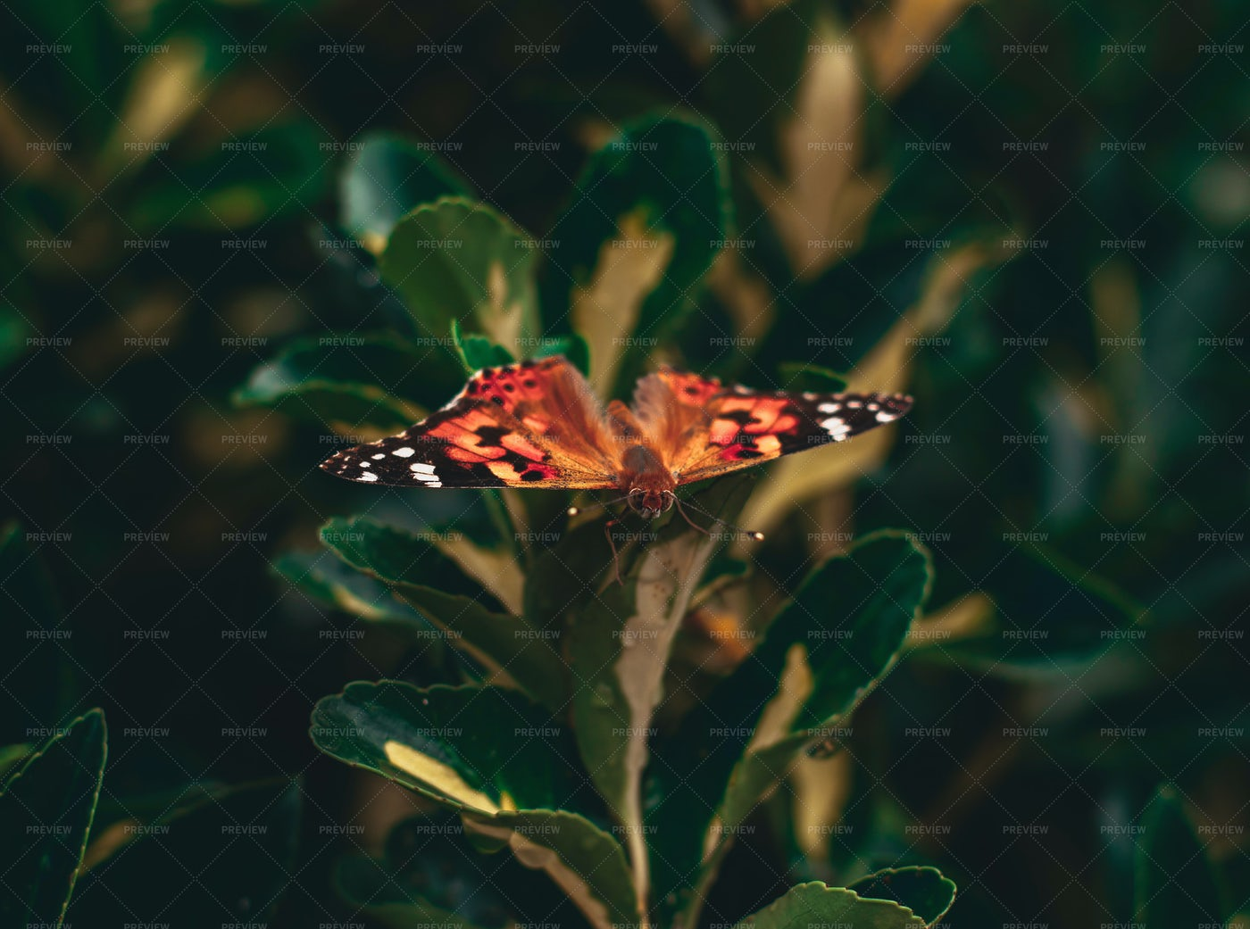 Tropical Butterfly: Stock Photos
