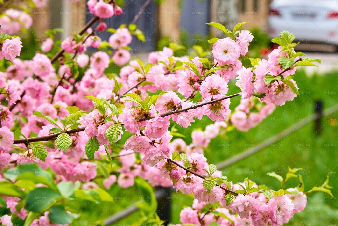Spring Bloom: Stock Photos